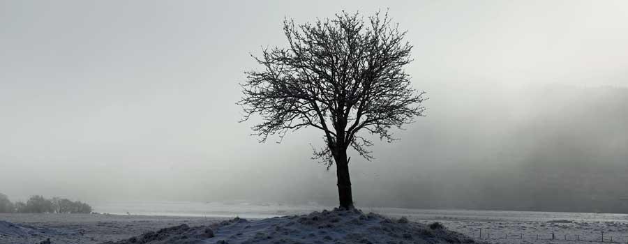 Mingarry in the mist