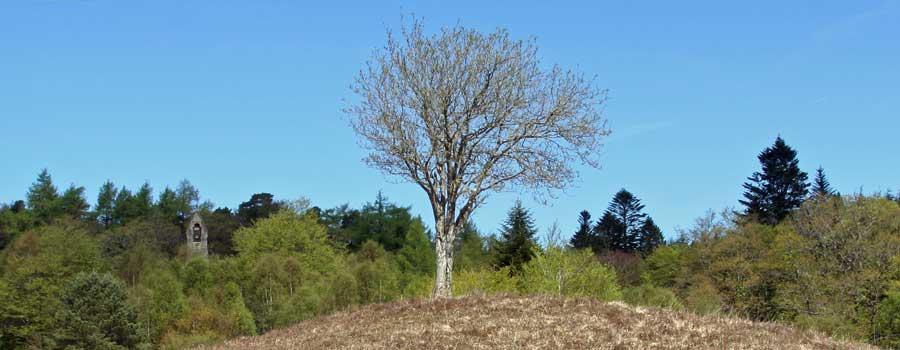 The Rowan Tree in Mingarry Park